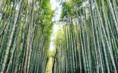 posciel z bambusa 2 400x250